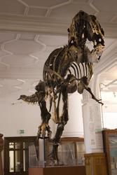 809-museum_dinosaur_2428.jpg