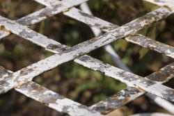 1107-garden trellis