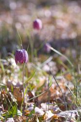 1122-purple_bells_1590.jpg