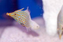1216-saltwater_tropical_fish_2137.jpg
