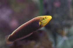 1217-saltwater_tropical_fish_2216.jpg