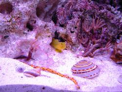 1218-sea_shells_00596.JPG