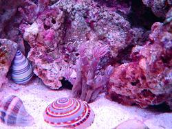 1219-sea_shells_00650.JPG