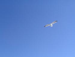 940-seagulls