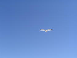 941-seagulls