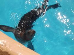 668-seal_water163.jpg
