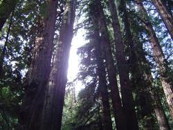 896-sequoia_forest_02022.JPG