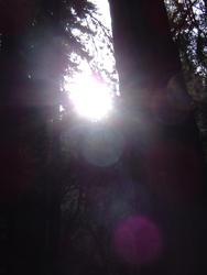 898-sequoia_forest_02024.JPG