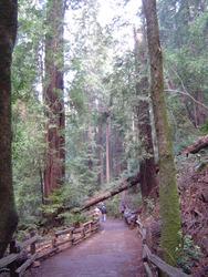 899-sequoia_forest_02026.JPG
