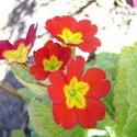 848-spring_flowers_2210.JPG
