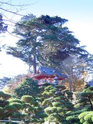 1010-tea_gardens_temple02183.JPG