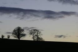 1087-tree_silhouette_1034.JPG
