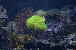 1222-tropical_corals_IGP0709.JPG