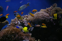 1257-tropical_saltwater_aquarium_1013.JPG