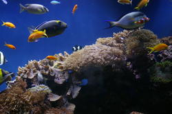 1258-tropical_saltwater_aquarium_1014.JPG