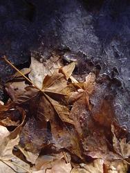 906-winter_leaves_2289.JPG