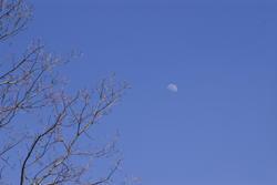 1144-winter_moon_P1583.jpg