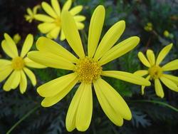 850-yellow_flower02138.JPG