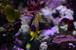 1315-coral_reef_1414.jpg