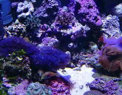 1318-corals_02491.JPG