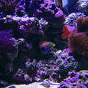 1319-corals_02512.JPG