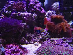 1320-corals_02515.JPG