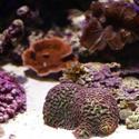 1321-corals_1270.JPG