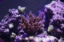 1279-hard_corals_0199.JPG