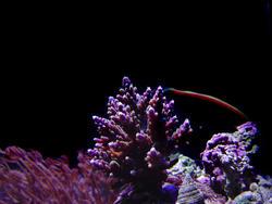 1280-hard_corals_02408.JPG