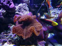 1284-mushroom_anemones02485.JPG