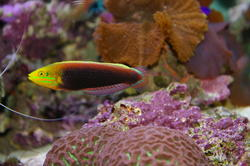 1291-saltwater_tropical_fish_0047.JPG
