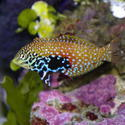 1344-saltwater_tropical_fish_0385.JPG