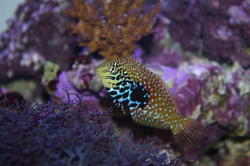 1346-saltwater_tropical_fish_0389.JPG