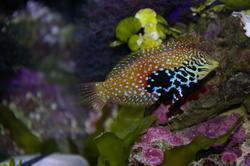 1347-saltwater_tropical_fish_0390.JPG