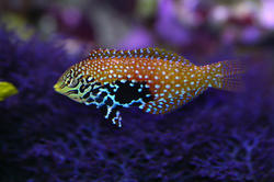 1348-saltwater_tropical_fish_0802.JPG