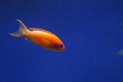 1294-saltwater_tropical_fish_0988.JPG