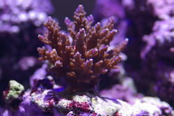 1295-tropical_corals_0448.JPG