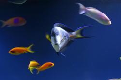 1351-tropical_fish_0986.JPG