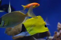 1297-tropical_fish_0991.JPG