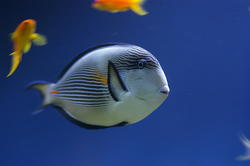 1298-tropical_fish_0995.JPG