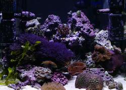1352-tropical_saltwater_aquarium_0835.JPG