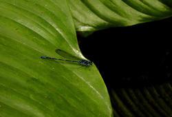 1674-Dragonfly