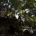 1694-Tikal Jungle Ruins