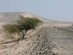 1912-Peru_Pan_Am_Highway_nr_Nazca.jpg