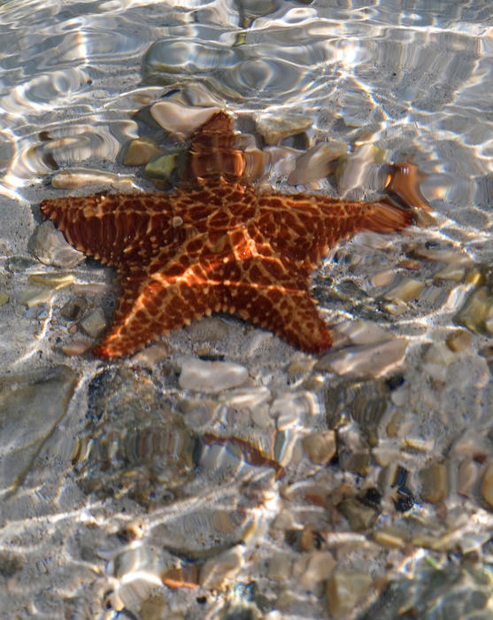 a starfish in shallow crystal clear water