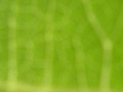1876-Abstract natural green background
