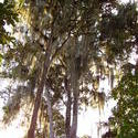1801-Jungle Lichen