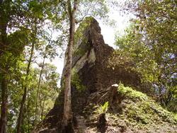1817-Jungle Runis