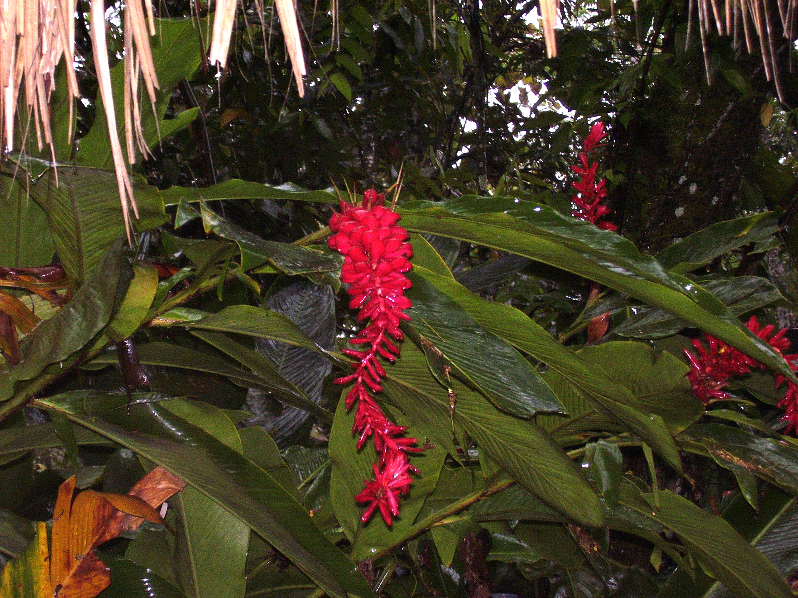 free stock photo 1796 rainforest flowers freeimageslive