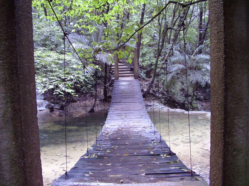 A rope bridge with a wooden deck crossing a small jungle stream